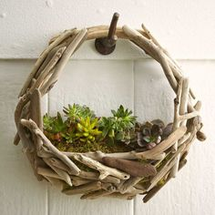 Look what's washed ashore. Capturing the beauty of the sea, this twist on the traditional hanging basket planter is crafted from driftwood collected on Oregon and California beaches. It's easy to hang and beautifully cradles a small bed of succulents. Basket Planters, Outdoor Planters, Hanging Baskets, Garden Planters, Succulents Garden, Outdoor Gardens, Hanging Gardens, Indoor Gardening, Hanging Planters