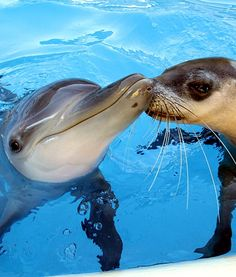 Dolphin and Seal Are Best of Friends