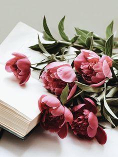 50 trendy Ideas for flowers pink peonies garden roses Peony Flower, My Flower, Amazing Flowers, Beautiful Flowers, Orquideas Cymbidium, Deco Rose, Wedding Destination, Peonies Garden, Flower Aesthetic