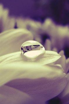 Water drop on a petal