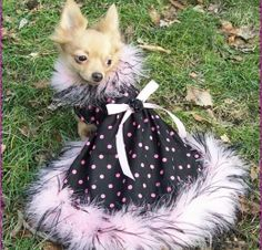 cute dogs in dresses | Glamorous Dog Dresses for small and big dogs-Sheratonluxuries.com
