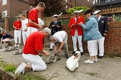 Swan Upping, The Thames - Swan Upping, The Thames, 2015 The birds are captured and released on the Thames as part of the annual swan census. The ceremony dates from the 12th century. - Martin Parr