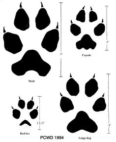 drawings of fox footprint | http://icwdm.org/Inspection/tracks.asp