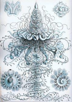Medusa-Blue Jellyfish-Soft delicate colors-home decor- Ocean-Nature-Underwater-Art Treasures-Art Deco-1900