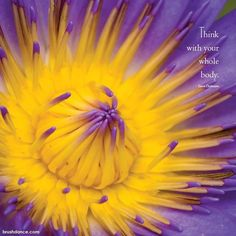 Image from our 2017 Jewel of the Lotus Wall Calendar . . #jewelofthelotus #lotus #lily #peace #innerbeauty #tranquility #wholeliving #cleanliving #quoteoftheday #brushdance #mindfulliving