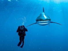 Tiburones Punta Blanca, Bahamas::..*•#~~$??*