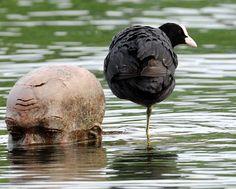 """Julio 16 de 2012 - Un ave acuática descansa cerca a la escultura de bronce """"El Niño"""", del artista alemán Ubbo Enninga en el lago Constanza (Bodensee) en Radolfzell (Alemania). (AFP/VANGUARDIA LIBERAL)"""