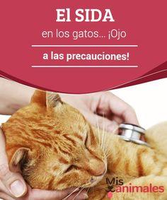 El #SIDA en los gatos... ¡Ojo a las precauciones!   Hoy vamos a abordar un tema muy temido y un tanto peligroso, nos estamos refiriendo al SIDA en los gatos o #virus de #inmunodeficiencia #felina (VIF). Dogs, Animals, Cat Eyes, Dog Cat, Animals Beautiful, Animals And Pets, Outdoor Life, Pet Dogs, Doggies