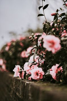 Should I create a flower board? Because this is captivating__