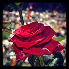 Vi vil aldri glemme