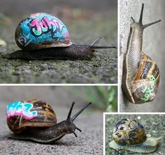 """Inner City Snail Project"" by London artist Slinkachu. Paints snails with non-toxic paint and releases them back into their environment."