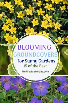 15 Best Flowering Ground Covers for Sun - Finding Sea Turtles Sloped Garden, Ground Cover, Sandy Soil, Plants, Growing Grass, Garden Problems, Phlox Plant, Sun Plants, Ground Covers For Sun
