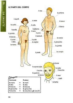 Italian vocabulary - Parts of the body
