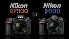 Nikon D7500 Vs Nikon D500