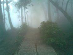 Bosque en la Colonia Tovar. Venezuela.