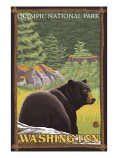 Black Bear in Forest, Olympic National Park, Washington Premium Poster