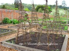 English Vegetable Garden - pea trellises made of twigs and vines