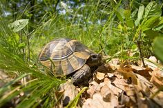 Romanian reptiles rule their ''hotspots'' | Conservation | The Earth Times