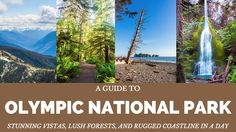 One Day Itinerary for Olympic National Park
