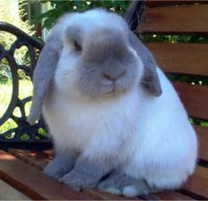 I want a bunny but Tigger would eat it :(
