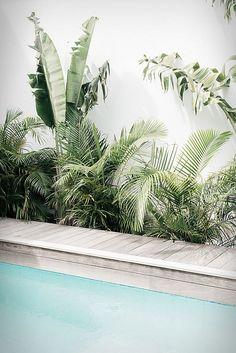 Villa Palmier - tropical pool and garden set on the sea in St. Photo: Kate Holstein Villa Palmier - tropical pool and garden set on the sea in St. Jardin Luxuriant, Villa, Tropical Decor, Tropical Garden Design, Tropical Plants, Beach House Decor, Pool Designs, Backyard Landscaping, Tropical Pool Landscaping