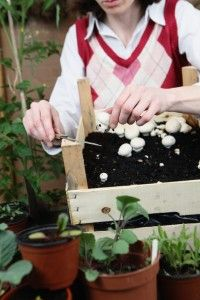 4 Easy Steps To Growing Your Own Mushrooms
