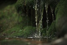 """elvenforestworld: """" Water by Deemax """" Wood Nymphs, Forest Garden, Walk In The Woods, Heaven On Earth, Dragon Age, Natural History, Faeries, Woodland, Northern Lights"""