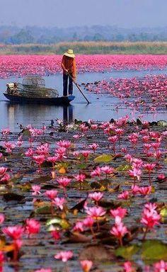 Beautés de fleurs