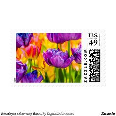 Amethyst color tulip flowers postage