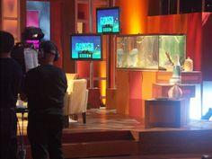 Entertainment Entertainment Jobs, Entertaining, Tv, Television Set, Funny, Television