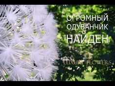 Тонкое искусство: большие бумажные цветы - YouTube