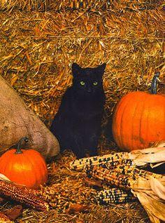 Doo Wacka Doodles: Halloween Ideals 1966