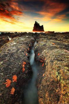 Motukiekie ... by Iurie  Belegurschi on 500px #nature
