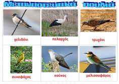dreamskindergarten Το νηπιαγωγείο που ονειρεύομαι !: Τα αποδημητικά πουλιά φεύγουν : ποιήματα και εποπτικό υλικό Spring Crafts, Kids And Parenting, Preschool, Birds, Blog, Animals, Autumn, Fall, Greek