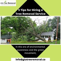 cutting down trees would seem like the most unlikely thing to do right? Well, truth be told, sometimes it is the only option. Call @GtaTreeRemoval at +647-641-6881 now. Tree Removal Service, Removal Services, Gta, Things To Do, Environment, How To Remove, Trees, Wellness, Things To Make
