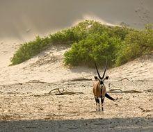Wildlife at Hoanib Skeleton Coast Camp Mountain Zebra, Namib Desert, Camps, Countries Of The World, Wilderness, Skeleton, Safari, Landscapes, Wildlife