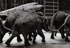 Comme des Garçons Print Ad Archive   THIRD LOOKS