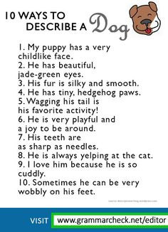 Ways to describe a Dog