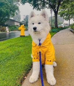 Made of water-repellant fabric, our best-selling Talon raincoat has the vibe of a traditional anorak for your pup. No worries: Details like a sturdy snap-off hood, adjustable cuffs, drawstrings and flap pockets means it's super functional during all those spring showers - without ruining your pup's hair. Featuring: #dogapparel #dogaccessories #dogclothing #dogfashion #doglife #max-bone Baby Animals Super Cute, Super Cute Puppies, Cute Little Animals, Cute Dogs And Puppies, Cute Funny Animals, Doggies, Baby Animals Pictures, Cute Animal Photos, Mellow Yellow