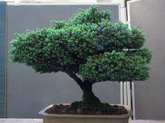 bonsai 4 by yeah-thats-me.deviantart.com on @deviantART