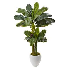 Nearly Natural 5 ft. Double Stalk Banana Tree in White Planter - 5967