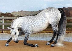 Model Horse Customizing by Ansata, Gallery Dapple grey