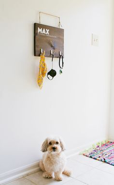 In need of a crafty household #DIY project that's useful for you and your dog? Try this dog hanging rack to store your furry friend's leash, jacket, and collar!