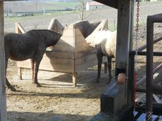 Image result for ratelier foin chevaux paddock