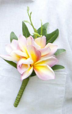 Soft pink & yellow frangipanis Mens Boutonniere, Boutonnieres, Frangipani Wedding, Wedding Flowers, Wedding Men, Dream Wedding, Corsages, Hawaii Wedding, Hula