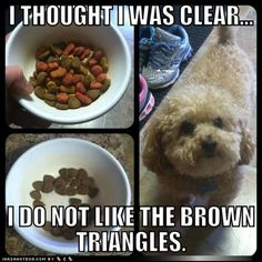 My dog does this too lol