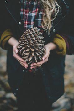 pinecone in autumn