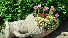 Container Plants, Diy Flowers, Garden Sculpture, House Design, Outdoor Decor, Green, Image, Ideas, Succulent Plants