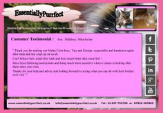 Customer Testimonial of EssentiallyPurrfect #mobile #MaineCoon #cat #catgrooming service. Ann #Manchester