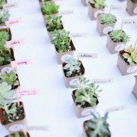 segnaposto-matrimonio-piante-grasse